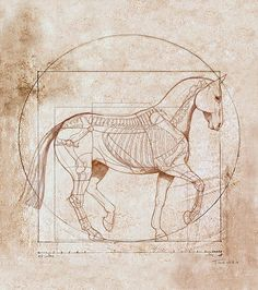 Da Vinci Horse In Piaffe Stretched Canvas Print / Canvas Art By Catherine Twomey Horse Drawings, Animal Drawings, Art Drawings, Drawing Art, Canvas Art, Canvas Prints, Art Prints, Horse Anatomy, Horse Print