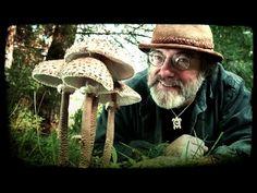 Paul Stamets - How Mushrooms Can Save Bees & Our Food Supply   Bioneers - YouTube