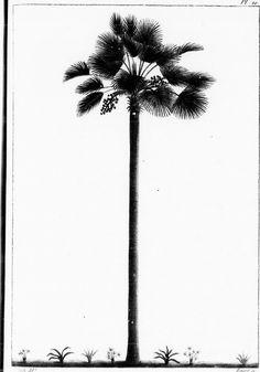 Title: Histoire des arbres forestiers de l'Amérique septentrionale [microforme] : considérés principalement sous les rapports de leur usage dans les arts et de leur introduction dans le commerce ainsi que d'après les avantages qu'ils peuvent offrir aux gouvernemens en Europe et aux personnes qui veulent former de grandes plantations Identifier: cihm_53757 Year: 1813 (1810s) Authors: Michaux, François-André, 1770-1855 Subjects: Forêts et sylviculture; Arbres; Ressources naturelles; Chêne…