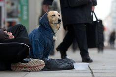 """Gespräch mit einem Hundepsychologen: """"Wir wollen Agility machen, nicht der Hund"""" - Inland - FAZ"""