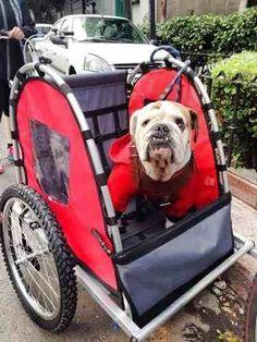 Trailer Bike Remolque De Bicicletas Para Niñ@s Y Mascotas - $ 1,499.00