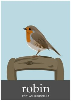 Robin. Erithacus Rebecula. Available as a greetings card from www.thecardshed.com