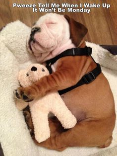This little Bulldog Puppy is so cute sleeping with its teddy bear! Puppies sleeping with their cuddly stuffed friends. Little Puppies, Cute Puppies, Cute Dogs, Dogs And Puppies, Doggies, Funny Dogs, Terrier Puppies, Boston Terrier, Corgi Puppies