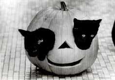 Kittens play in a jack-o-lantern in Madison, WI, 1965