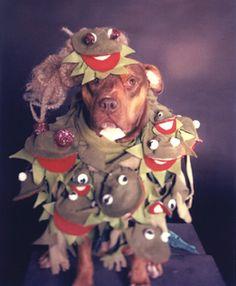 Dogs go gaga for Lady Gaga Dog Halloween Costumes, Dog Costumes, Funny Dog Images, Black And White Dog, I Like Dogs, Love Pet, Dog Mom, Animal Photography, Lady Gaga