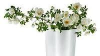 Kuvahaun tulos haulle aalto maljakko Herbs, Vase, Home Decor, Decoration Home, Room Decor, Herb, Vases, Home Interior Design, Home Decoration