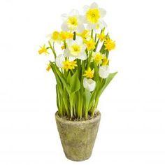 White Tulips, Daffodils, Interflora, Finnish Flower Shop, March 2016