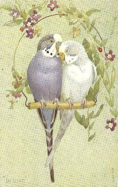 "Lot of 6 Parakeet Vintage Valentine's ""Lovebird"" Postcards Cute Birds, Pretty Birds, Beautiful Birds, Vintage Birds, Vintage Postcards, Vintage Art, Budgies, Parrots, Cockatiel"