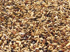 BRITISH / GOLDFINCH: A very popular mixture for breeders and feeding wild birds. Ingredients: canary seed, turnip, linseeds, niger, hemp, plate millet, japanese millet, chicory, grass seedds and peeled oats. http://shop.robharvey.com/british-finch--goldfinch-451-c.asp