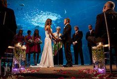 The Florida Aquarium; Tampa, Florida
