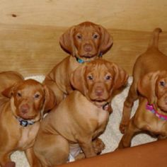 I am going to populate my home with puppies.