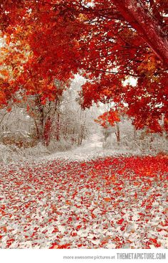 Winter And Fall Meet Each Other…