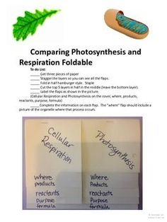 $ Photosynthesis and Respiration Foldable - Two Versions.  Comes with complete printable template.