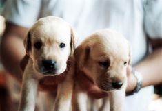 Puppies for me.
