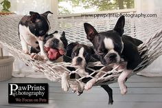 We Focus on Pets – Pet Photographer, Dog, Cat Horse » PawPrints Photography Blog – Pet Photographer, Dog Photographer, Cat Photographer