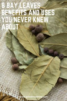 Bay leaf is an aromatic leaf that is mainly used for cooking purposes, but what most people don't know is the fact the herb has many more uses that are quite unexpected. Herbal Remedies, Health Remedies, Home Remedies, Herbal Magic, Bay Leaf Tea Benefits, Lemon Health Benefits, Bay Leaves Uses, Diy Gifts For Grandma