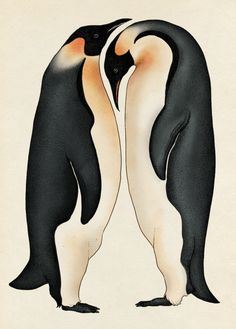 katie-scott:  Penguins From Animalium, published by Big Picture...