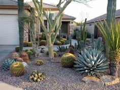 Front Yard Landscape Cactus - My Front Yard Garden Cactus Amenagement Jardin Decoration Cactus Landscape For The Front Yard Succulent Landscaping Pin By Dream Yard On Front Yard La. Cheap Landscaping Ideas, Landscaping With Rocks, Front Yard Landscaping, Arizona Landscaping, Mulch Landscaping, Backyard Patio, Backyard Ideas, Succulent Landscaping, Succulents Garden