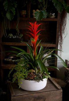 Plus five favorite red-flowering plants for the garden. Container Flowers, Container Plants, Container Gardening, Indoor Garden, Indoor Plants, Outside Plants, Large Plants, Plant Design, Tropical Paradise