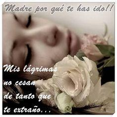 Esta Rosa Para Mi Madre Ausente Mi Luto Tu Ausencia Mi Dolor