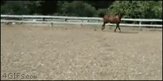 Tumblr: 4gifs: See ya later two-legs! [video]