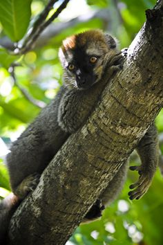 """""""Lazy Face."""" Isalo National Park, Ranohira, Madagascar. March 2013."""