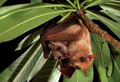 Merlin D. Tuttle, Bat Conservation International, www.batcon.org