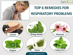 Some of the most effective herbal remedies for respiratory problems include the use of ginkgo, mullein, echinacea, licorice, cannabis, thyme, oregano, peppermint, and elecampane, among others. The classification of respiratory problems actually covers a wide range of ailments and disorders affecting the lungs and respiratory system. Two broad categories within this are upper and lower respiratory problems.