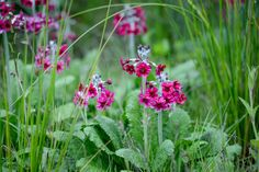Discover some of the best flowering plants for damp shade, perfect for brightening up dark corners, with expert help from BBC Gardeners' World Magazine.