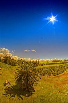 Waikato - New Zealand Countryside