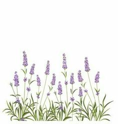Wreath of lavender flowers vector Botanical Flowers, Lavender Flowers, Botanical Prints, Lavander, Watercolor Cards, Watercolour Painting, Watercolor Flowers, Flower Invitation, Flower Frame