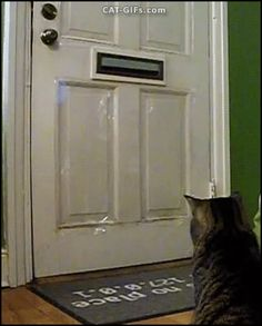 "CAT GIF • Amazing Cat gets mail. GOTCHA! Mine. So funny. ""Everyday around lunch time our cat, The Baron, waits for USPS to drop off his toy for the day. Sometimes we actually get to read our letters."""