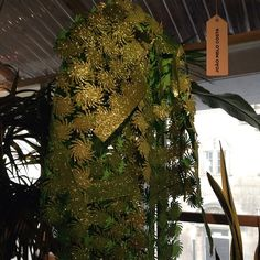 #joaomelocosta #portugalfashionlondres #studioshowcase Show Case, Cactus Plants, Portugal, Bloom, Studio, Instagram Posts, Cacti, Cactus, Studios