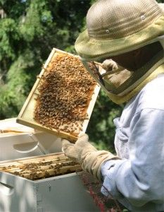 Beekeeping: Backyard basics - Grow Northwest I want a bee hive!