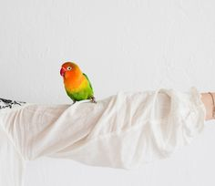 Most fully-grown parrots have the mental capacity of a four- or  five-year-old human child, and they yearn to connect. My story on loneliness and connecting with a parrot for The Lonely Hour.