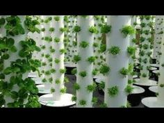 Wall Garden | Vertical Garden Installation & Operation - YouTube