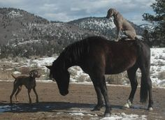 Too weird-- a dog on a horse's rump and another at its head.