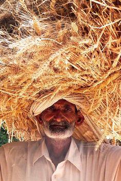 Carrying sheaves, old Punjab man