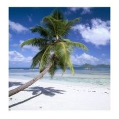 Tropical Beach Pictures ❤ liked on Polyvore featuring backgrounds #vacationspics