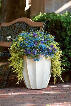creeping jenny, lobelia, purple petunias gardening, landscaping, plantings, container garden