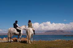Connemara Ponies Vista