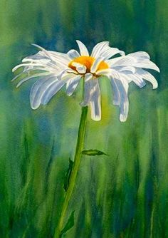 Sharon Freeman's Pacific Northwest Watercolors Sweet single daisy watercolor painting. Shasta Daisy Flower With Blue Green Background by Sharon Freeman - Shasta Daisy Flower With Blue Green Background Painting - Shasta Daisy Flower With Blue Green Back Watercolor Landscape, Watercolor Flowers, Landscape Paintings, Watercolor Paintings, Watercolor Paper, Watercolours, Simple Watercolor, Landscape Art, Painting Art
