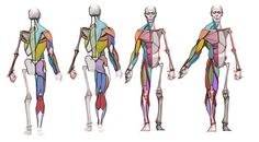 Analytical Figure Drawing - CGMA 2D Academy