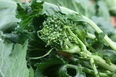 raw broccoli raab
