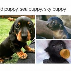 """Cute baby animals - miracufic """" neverparted """" """" but everything changed when the fire puppy attacked """" Cute Animal Memes, Animal Jokes, Cute Funny Animals, Funny Animal Pictures, Funny Cute, Funny Pics, Cute Puppies, Cute Dogs, Cute Babies"""