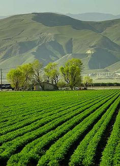 The Central Valley, which grows one third of the nation's food