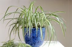 Low Light Houseplants - Plants That Don't Require Much Light