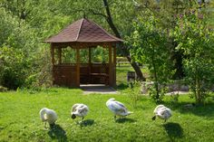Classic wooden gazebo set amid grass and trees with built-in bench in the interior