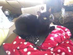 Cats love laptops or anything else you're trying to look at. | 19 Things You'll Only Understand If You Have A Cat