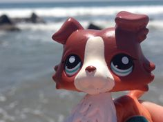 Lps at the beach